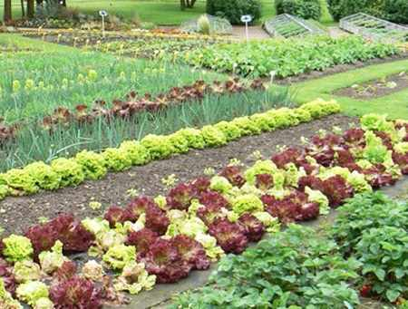Порядок на грядках: какие растения несовместимы друг с другом 20
