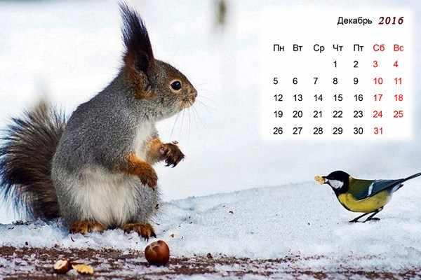 Календарь на ява