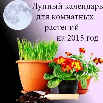 Календарь натальи степановой на 2017 год читать