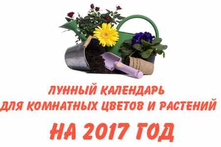 Комнатные цветы лунный календарь 2017