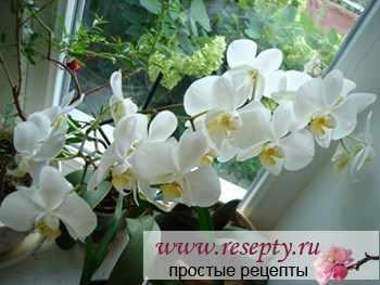 Календарь ухода за комнатными растениям